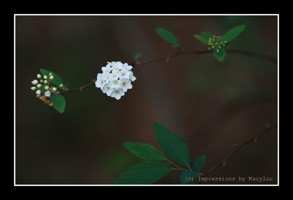 spring 28