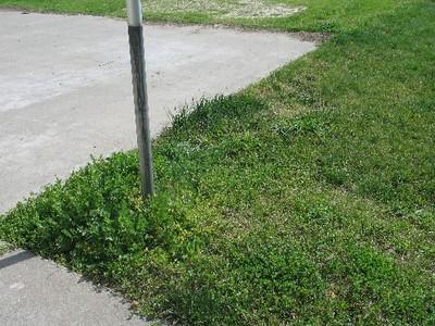 Flip flops, green grass & contentment 001